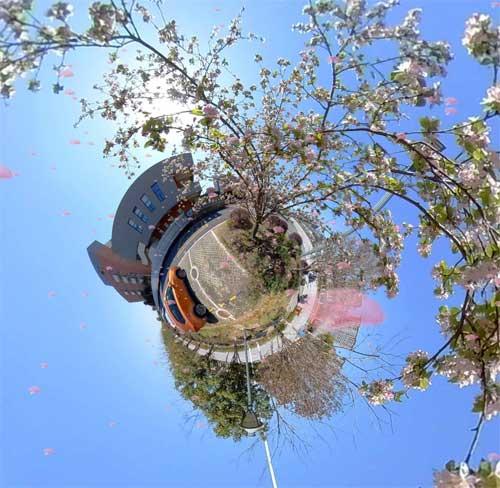 蓝天白云,花开泰外,全景春天!